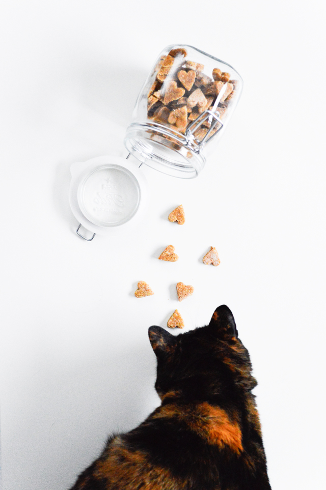Homemade chicken treats for cats and dogs