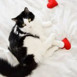 heart-shaped felt toys